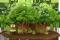 Msyteriöser Wald