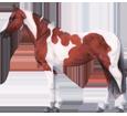 Bild von Paint horse